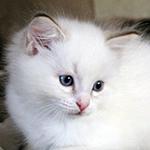 joni_top