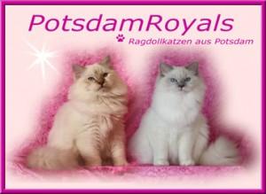 BannerPotsdam-Royals