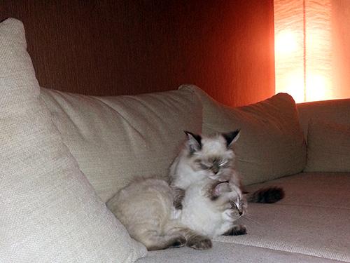 Leo und Lätti