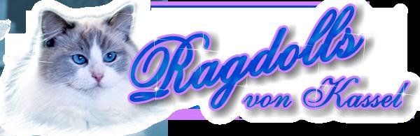 Ragdolls von Kassel