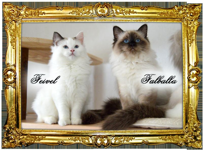 Wir haben kleine Kätzchen!