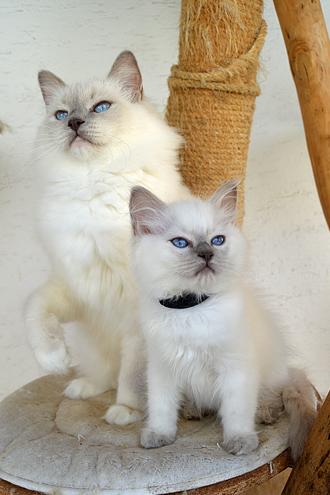 Kida mit Mama
